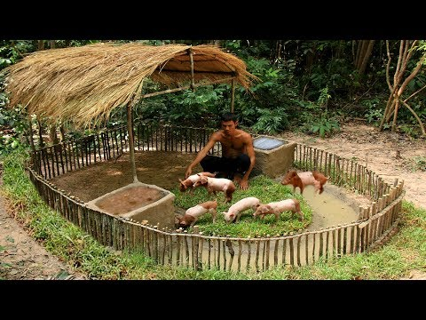 Build Mini Swimming Pool For Wild Pigs Around Build Wild Boa