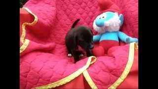 Puppies For Sale In Dc, Ma, Maryland, Nj, Ny, Pa, Ri | Adopt A Puppy