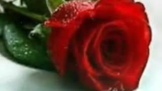 اغنيه الورد البلدى ل اصاله🌷🌷🌷