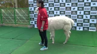 2013年J1リーグ第29節 vsジュビロ磐田(@等々力陸上競技場)