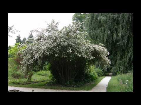 Botanic garden - Ljubljana & Slovenia & EU