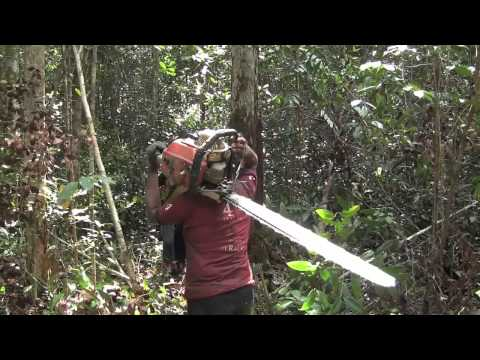 """Cari Hutan - In Search of Forest"" - Part 5 - Deforestation in Indonesia"