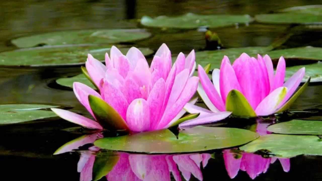 Los tres niveles de concentración - Budismo