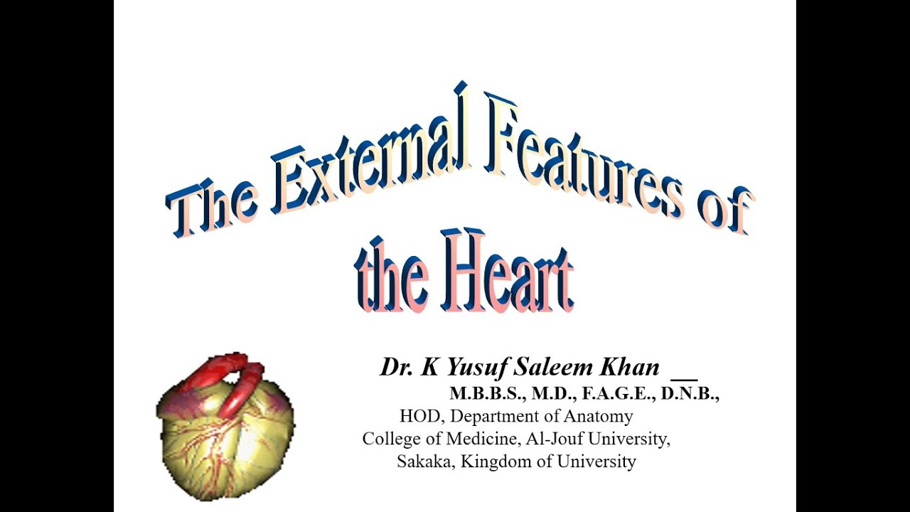 The External Features of the Heart (Anatomy Lecture) ...... by Dr ...