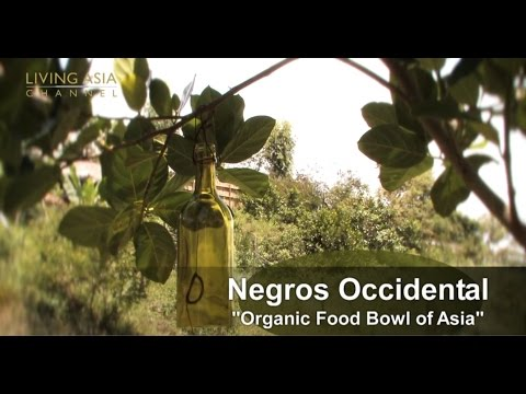 Organic Farming in the Philippines: Living Asia Channel Docu