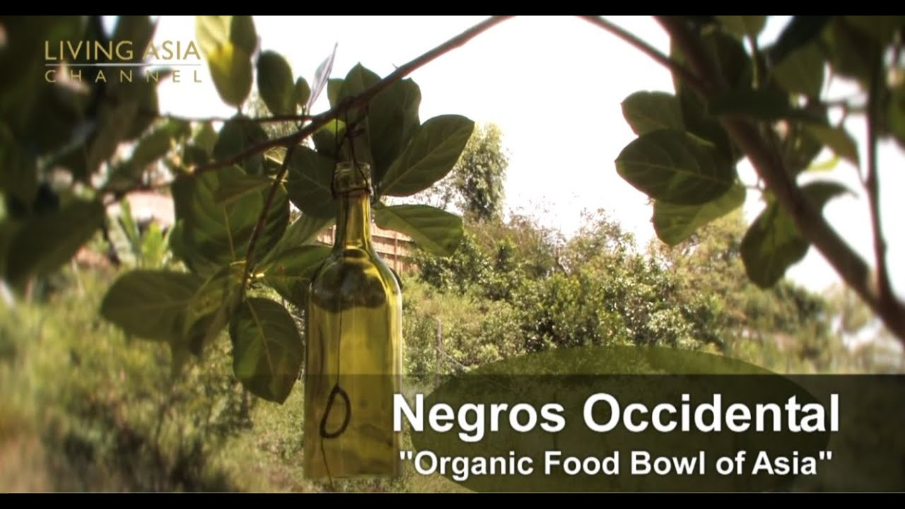 Negros Occidental | Society for Sustainable Tourism-SST