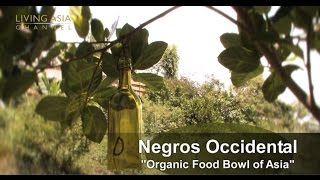 Organic Farming in the Philippines Living Asia Channel Documentary Organic Negros Occidental