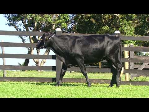 LOTE 3   0710BF