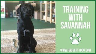 Training with SAVANNAH!