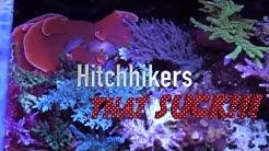 Top 5 Pests in Reef Aquariums
