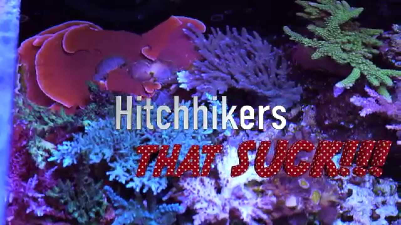 Top 5 Pests In Reef Aquariums Youtube