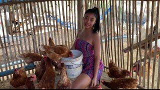 Farm Girl In The Wild Ep 3 : Biggest Chicken In Thailand .