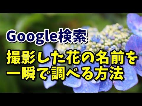 名前 花 を 調べる アプリ の GoogleフォトにあるGoogleレンズを使って花の名前を調べる