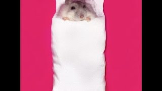 My Happy Hamsters love sleeping in these Japanese handphone pouches!