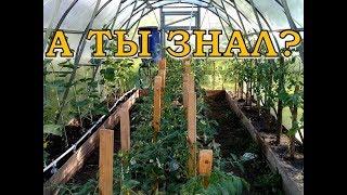 ПОДПОРКИ для томатов и огурцов в ТЕПЛИЦЕ и в ОГ
