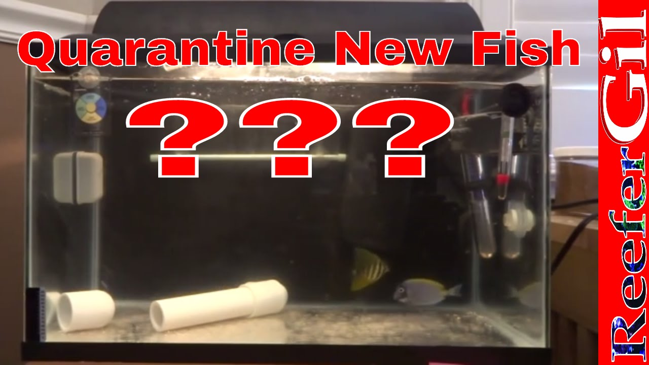 Fish tank quarantine - Fish Tank Quarantine