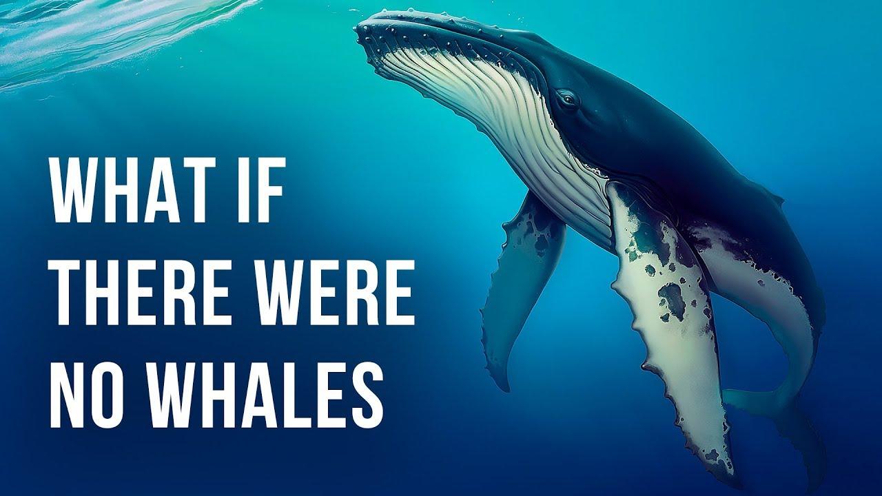 Was wäre, wenn es keine Wale auf der Erde gäbe? + video