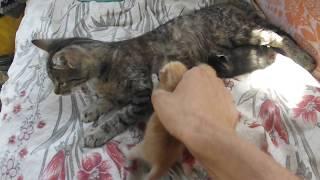 """Отдам котят в добрые руки Ч.4""""Матильда кормит подброшенных котят"""""""