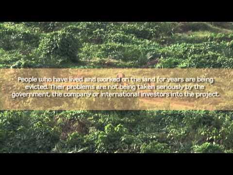Palm oil plantations in Uganda