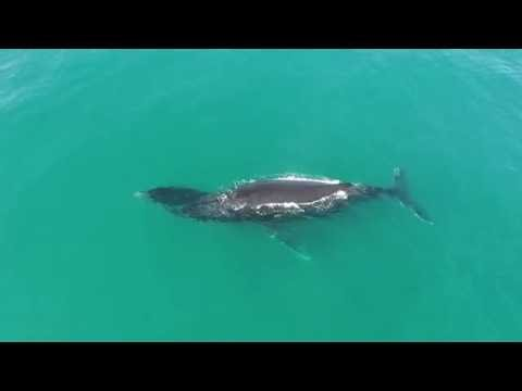 Whale Watching from Aqua Ceu Beach resort Mozambique