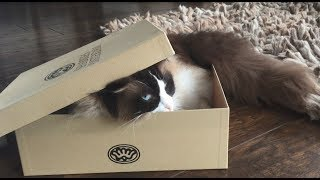 Cat guide to hiding techniques by Timo the Ragdoll Cat