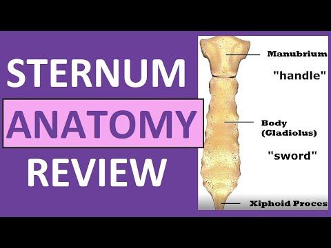 sternum-anatomy-|-manubrium,-gladiolus,-xiphoid-process