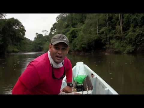 FISH FINDER Wolf fish fishing lessons Suriname