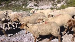 Fête de la Transhumance à Roubion (06420)