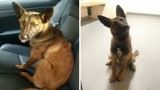 This Dog Refused To Quit Her Friend On A Roadside  Then Police Realized A Tragedy Had Happened