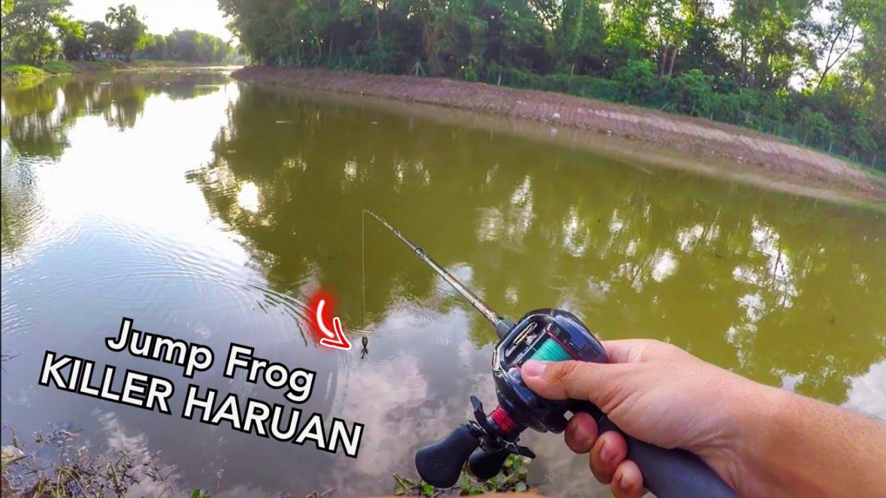 Haruan Jump Frog TOPWATER EXPLOSION