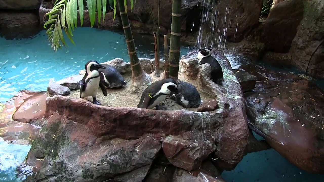 Dallas World Aquarium Penguins Love Birds Turtles Feeding