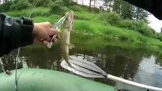 Риболовля на річці Західна Двіна - Частина № 1