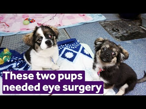 these-two-puppies-needed-eye-surgery-|-mayhew