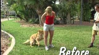 видео Недоуздок для собак