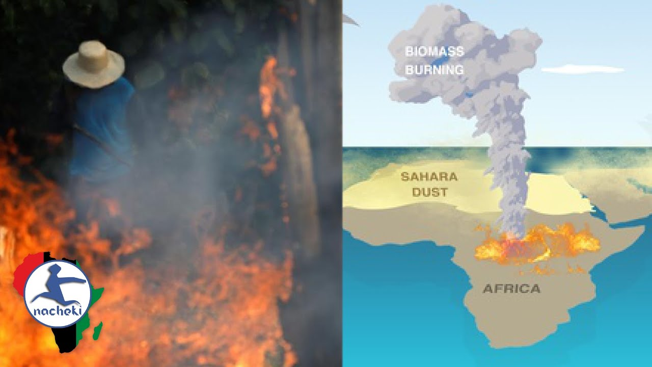 Africa's Fires Need Your Attention Now! Save Africa From Burning