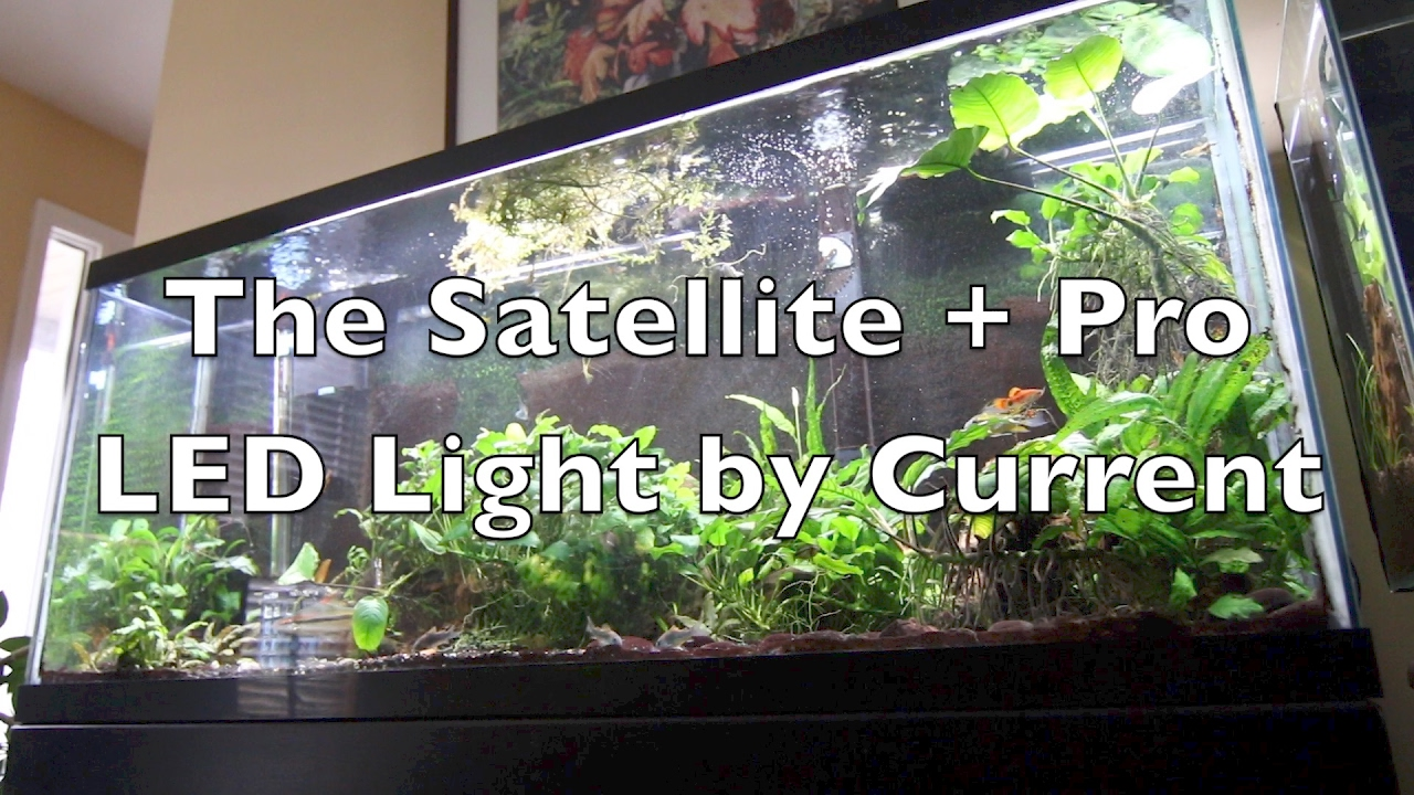 Best Led Light Fixtures For Planted Tanks Guide Reviews Fish
