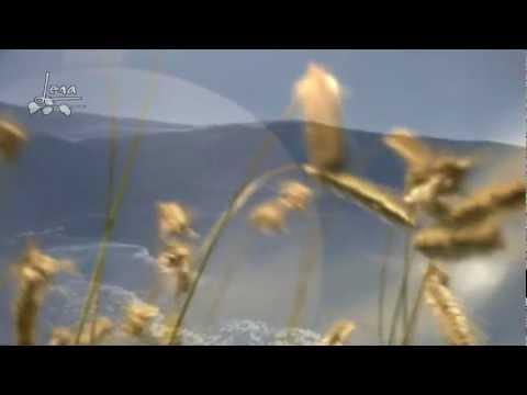 Meine Zeit mit Dir ☸ڿڰۣ-ڰۣ— Horst Frank (lyrics) HD