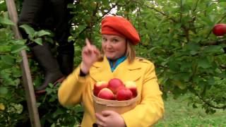 C'est l'automne : Le pommier
