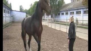 Horse Frends 2 Друзья лошади  окончание