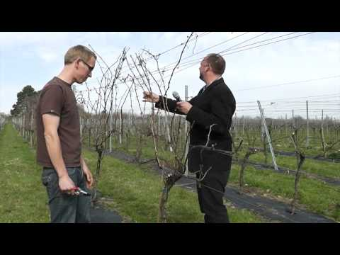 Winescape - A Year in the Life of a Vineyard - Upperton Vineyards