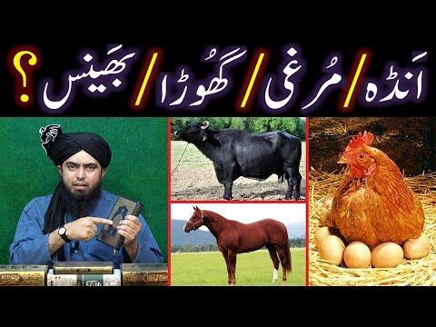 Kia BHAINS & GHORA bhi HALAL hai ??? Fiqah-e-HANAFI ki Engineering ??? (Engineer Muhammad Ali Mirza)