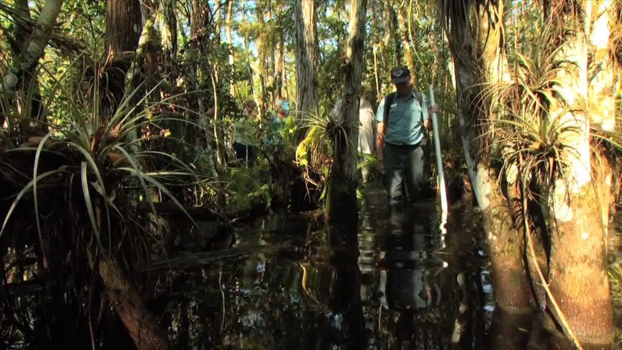Which Everglades Tour Is The Best Free Tours By Foot
