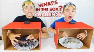 WHAT'S IN THE BOX! Néo vs Swan