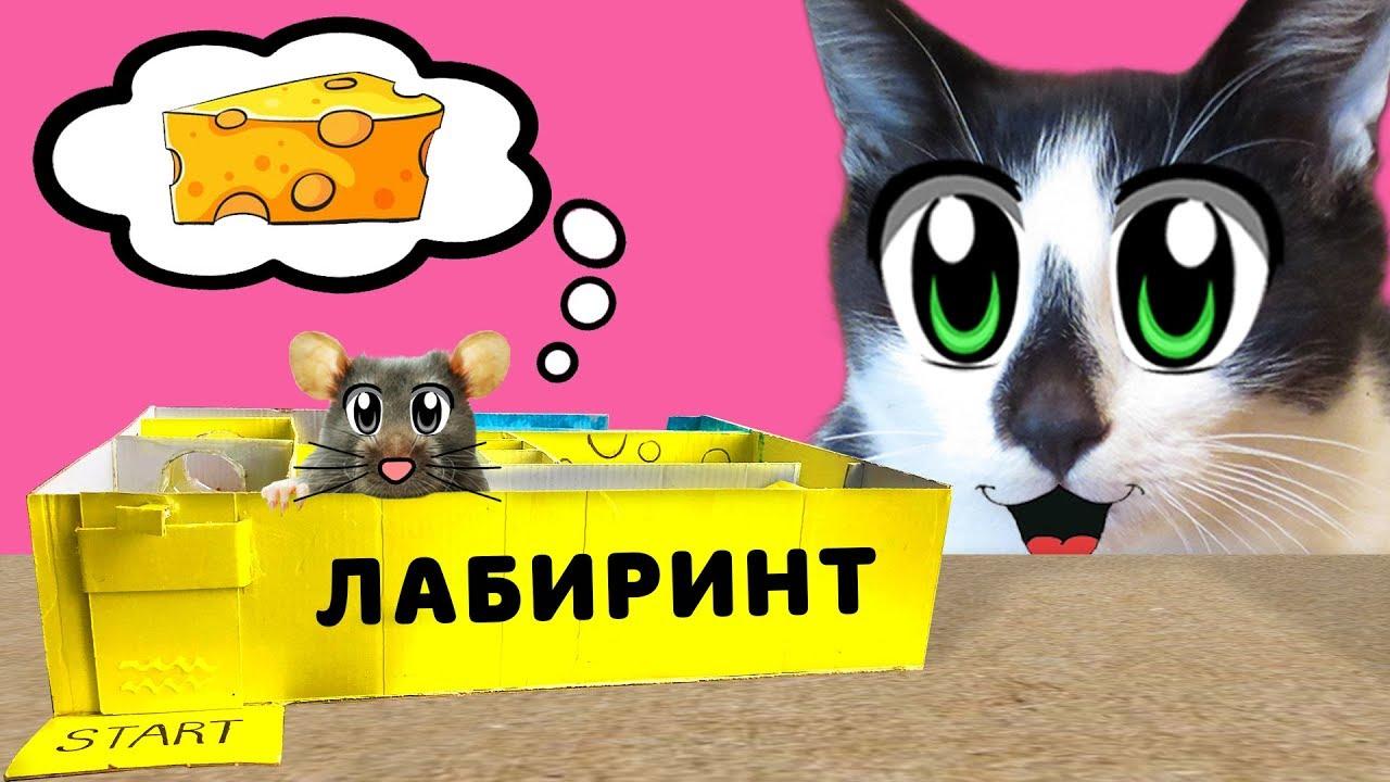 ЛАБИРИНТ для МЫШКИ СВОИМИ РУКАМИ! Как сделать ЛАБИРИНТ?