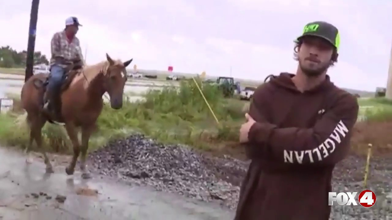 Cow rescue near Beaumont, Texas after Hurricane Harvey