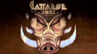 Cattarse - Javali