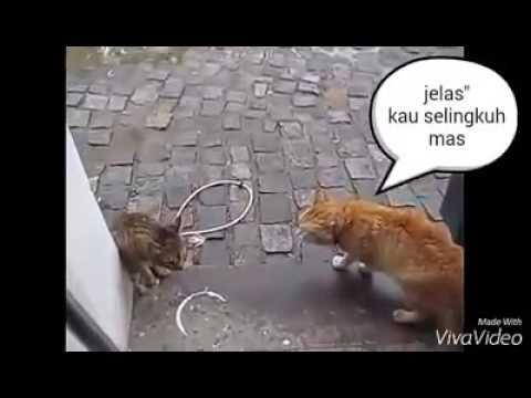 Video Super Lucu Balada Kucing Selingkuh Youtube