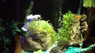 Freddy's Fish Tank, Bar Fish Tank, Best Bar Brooklyn,