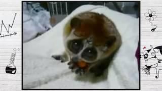 О ч м думают животные  Неделя комедий на YouTube   720x540