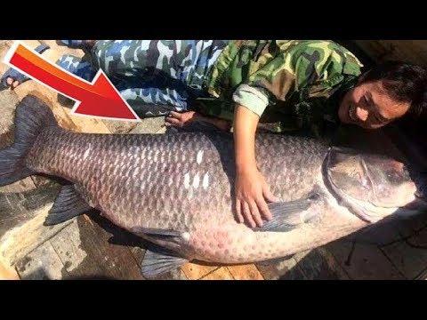 Самая большая в мире пойманная Рыба # Белый Амур 89 кг